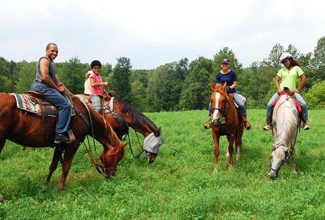 Break Time for the Horses